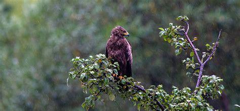 Ls Carnivored Tour romania eastern europe bird birdwatching
