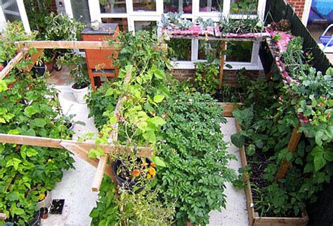 container gardening for food growing food in small spaces grow it yo self