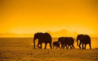 african animals wallpaper background hd wallpapers desktop