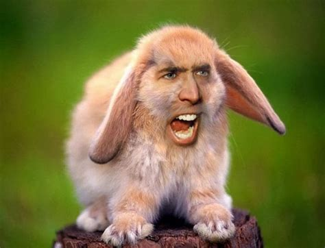 Nicolas Cage Meme Face - hilarious meme of nicholas cage photoshopped as other