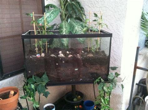 Old Fish Tank New Garden Home Pinterest Fish Tank Vegetable Garden