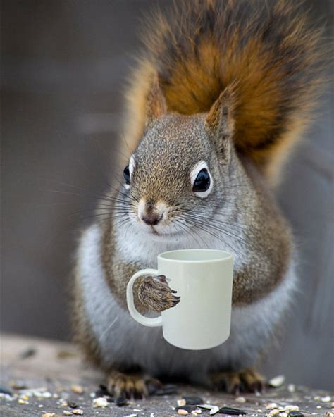 Bright Eyed bright eyed bushy tailed coffee loving squirrel 5x7