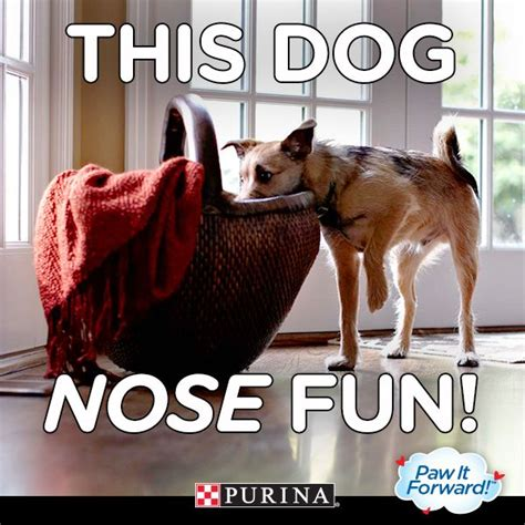 Pure Love For Pets Sweepstakes - 38 best images about national pet month on pinterest funny things we and cats
