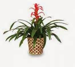 how to care for tropical house plants house plants tropical kootation