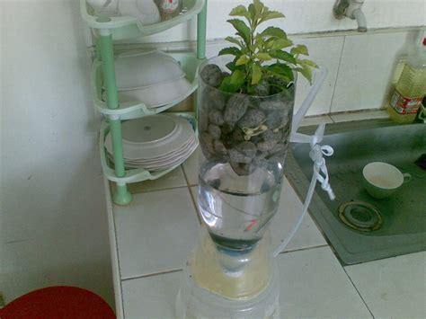 aquaponics home kit