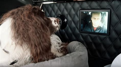 nissan for dogs nissan may the coolest vehicle for owners this s