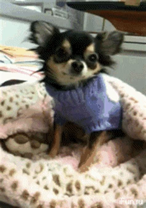 funny gif animations  animals  gifs picture  izismilecom
