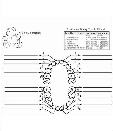 teeth chart template baby teeth chart 8 free pdf documents free