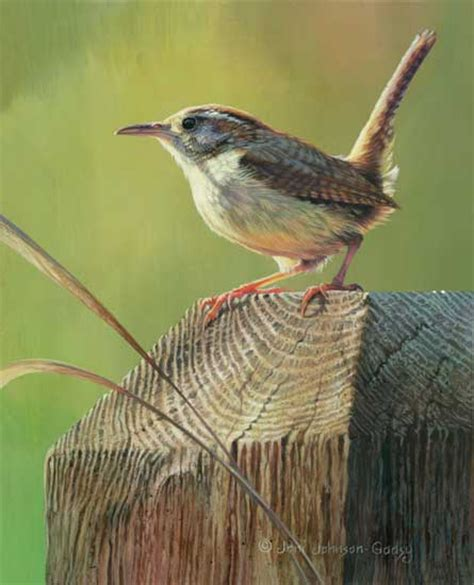 deck post sentry carolina wren print