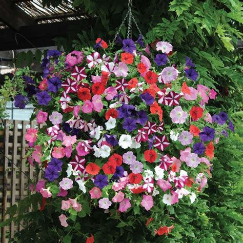 look at this mix of easy wave petunias hanging baskets pinterest