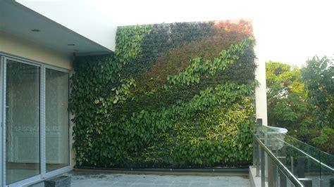 Vertical Garden Indonesia Cara Membuat Vertical Garden Indonesia Images
