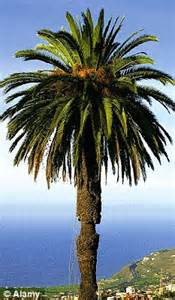 Fruit Trees In Phoenix - britain s gone palm potty as sales of these tropical beauties soar we choose five that will