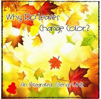 what causes leaves to change color in the fall fall activities why do leaves change colors experiments