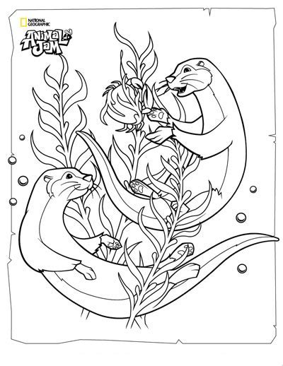 animal jam coloring pages eagle pin stellers sea eagle clipart coloring book 2 sea eagle