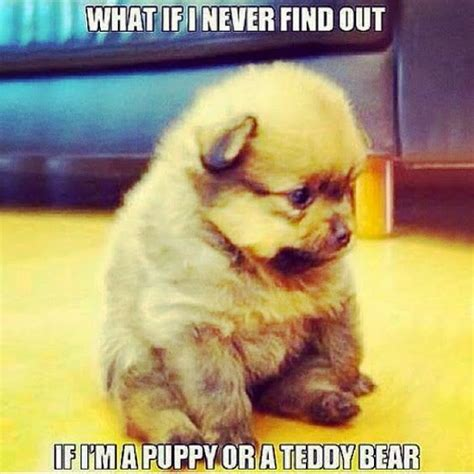 Its Out There For A Pup From The You Are A Photo Pool by Best 25 Puppy Meme Ideas On Puppy Meme