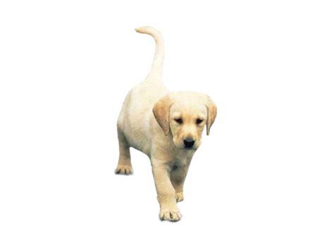 imagenes en png de animales perros gif animado gifs animados perros 61041