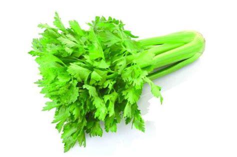 6 Macam Obat Cacingan tanaman obat keluarga dan manfaatnya belajar berkebun