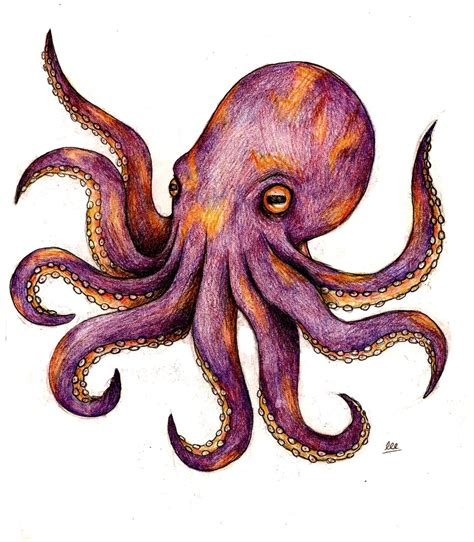 squid tattoo designs octopus tattoos designs ideas and meaning tattoos for you