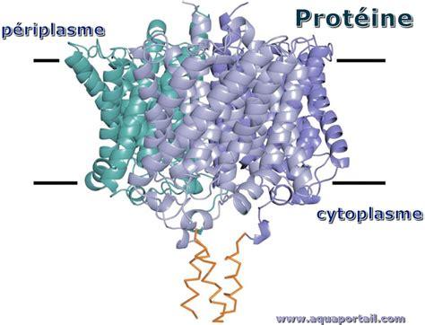 protein definition prot 233 ine d 233 finition et explications
