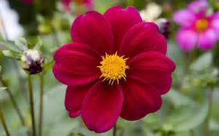 Flower Pic by Indian Celebrity Zoon Red Flowers Natural Wallpaper