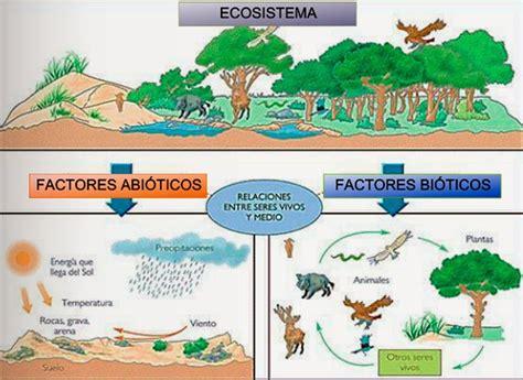 las cadenas y tramas troficas biociencia activa flujo de energ 237 a y materia en cadenas y