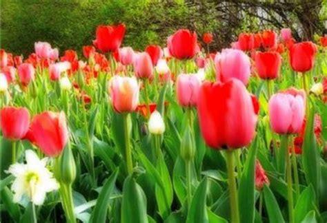 fiori gennaio quali sono i fiori da piantare a gennaio pollicegreen