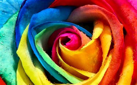 imagenes de rosas full hd fondos de flores wallpapers hd gratis