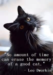 25 best cat quotes on pinterest dog best friend quotes