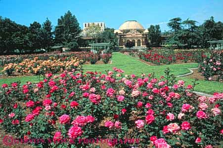 Flower Garden Los Angeles Garden At History Museum Exposition Park Los Angeles California Stock Photo 8458