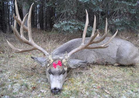 Deer Rack In The World by 5 Year Arkansas Breaks World Record For Largest