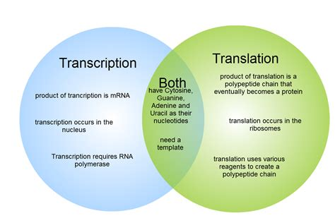 gliffy diagram transcription and translation venn