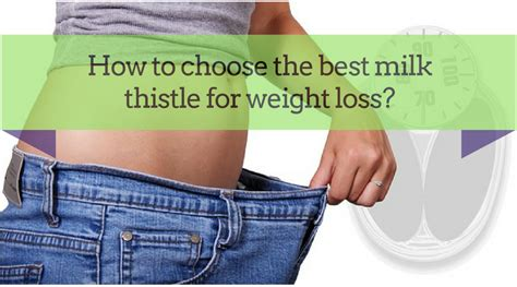 How Should I Take Milk Thistle To Detox Liver by How To Choose The Best Milk Thistle For Weight Loss