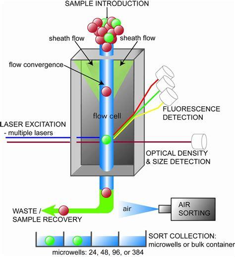 flow cytometry diagram union biometrica patented gentle air sorting mechanism