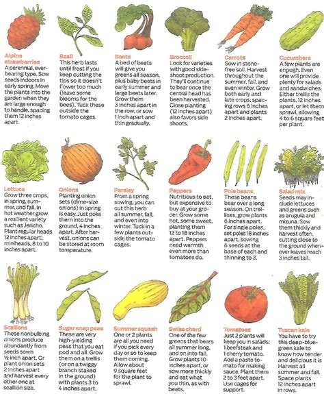 List Of Garden Vegetables Easy Garden Vegetables List Garden Ftempo