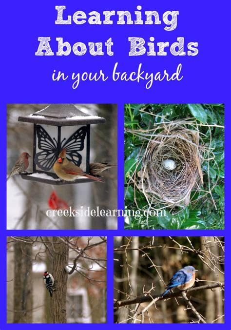 what do backyard birds eat bird study learning about birds of north america creekside learning