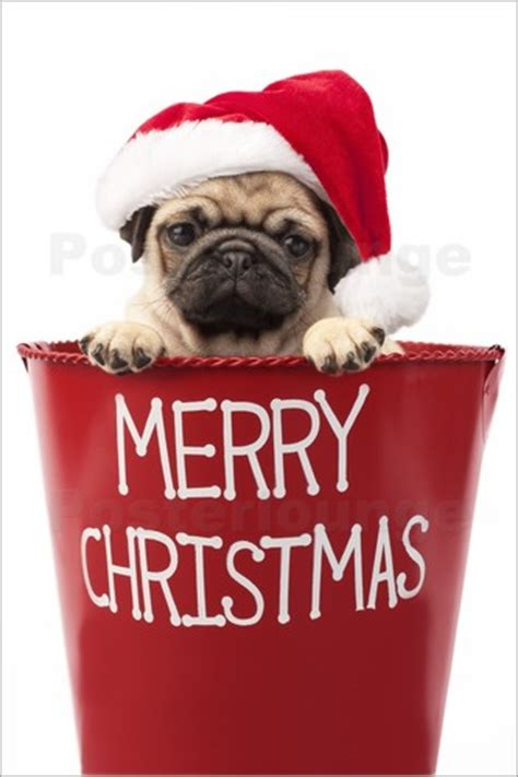 merry pug typography prints posters from 163 7 90 at posterlounge