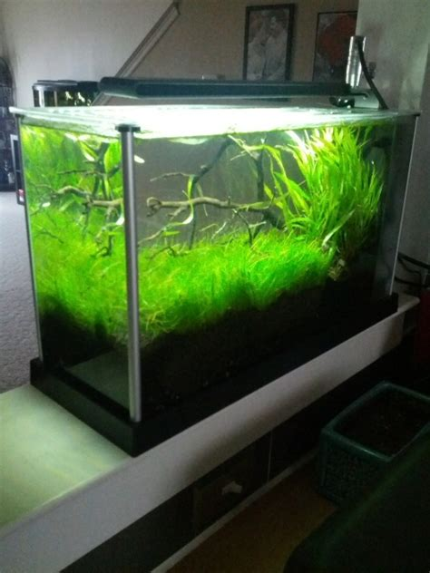 Fluval Spec V Aquascape by Fluval Spec V Thread The Planted Tank Aquariums