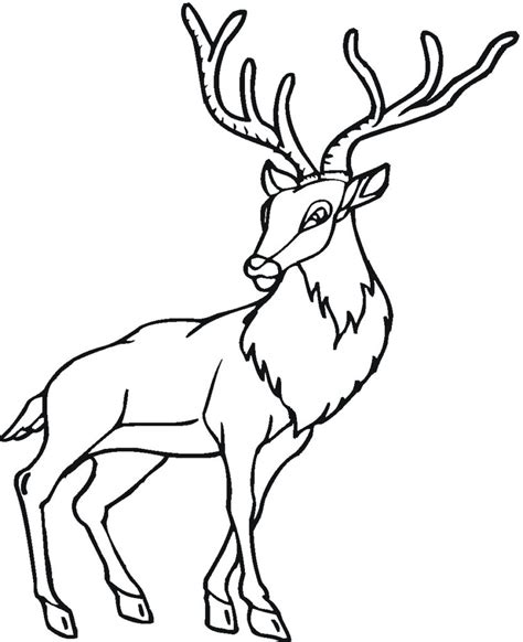 Free Coloring Pages Deer Printable Coloring Pages Free Colouring Pictures To Print