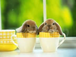 Best Coffee Mugs Ever 动物壁纸