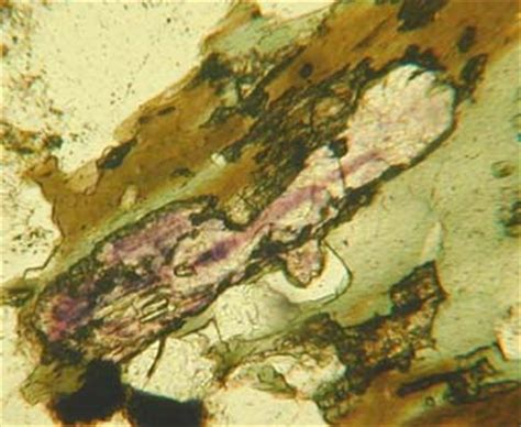 fluorite thin section fluorite