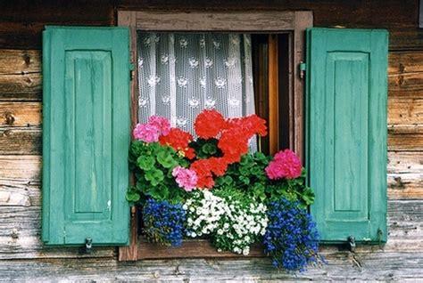 fiori da davanzale davanzali fioriti pollicegreen