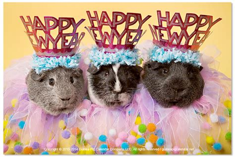 new year for the pig pig new year 28 images new year gold pig stock photos