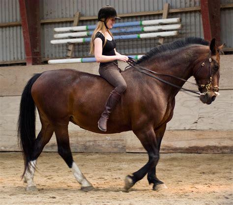 med bid endnu et skridt mod den metalfri hest
