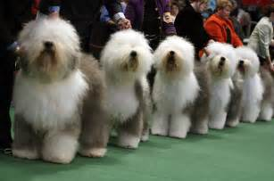 the westminster kennel club show photo essays time