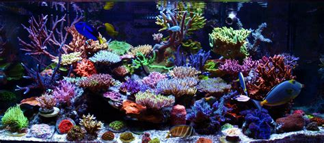 reefkeeping magazine december 2012 tank of the month