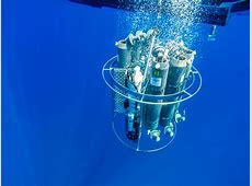 Take a breath, thank the phytoplankton | Podcast: Two Sea ... Groupings Of Animals
