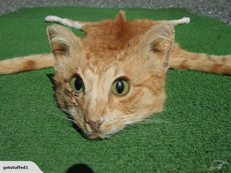 rug cat andrew lancaster taxidermist sells cat skin rug on trade me auction site photos huffpost