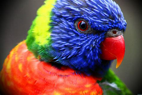 Colorful Parrot Hi Res Nature Photo Birds Colorful Animal