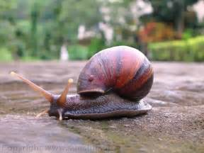 snail wallpapers images and animals snail pictures 717