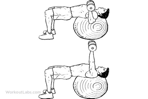 bench press stability stability swiss exercise ball dumbbell chest press